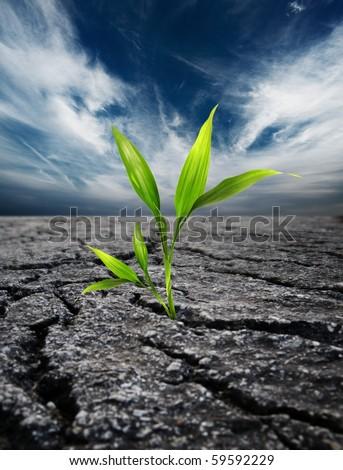 green plant growing trough dead soil stock photo © rufous
