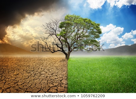 einsamen · Baum · Klippe · Silhouette · schönen · Sonnenuntergang - stock foto © psychoshadow