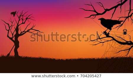 Aranha silhueta pôr do sol ilustração engraçado medo Foto stock © adrenalina