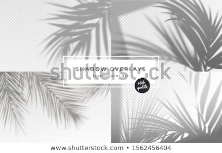 Monstera And Palm Branch Transparent Background Stock photo © adamson