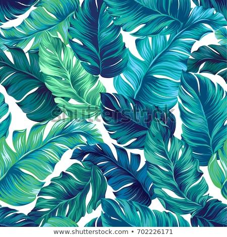 Patrón plátanos verde hojas de palma dibujado a mano tropicales Foto stock © Artspace