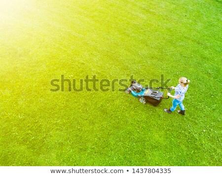 Légifelvétel udvar illusztráció fű művészet levelek Stock fotó © bluering