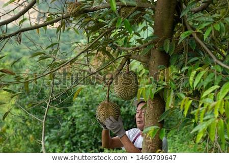 Jeans árvore comida mão verde Foto stock © szefei