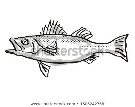 Japanese Seaperch Fish Cartoon Retro Drawing Stock photo © patrimonio