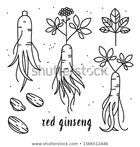 Ginseng vector icon illustration Stock photo © Ggs