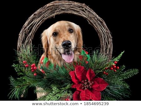 senior man with dog Stock photo © ivonnewierink