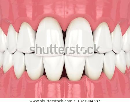 Tanden Open mond aardbei vruchten Stockfoto © carlodapino