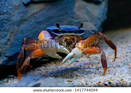 Caribbean Mangroves Stock photo © jkraft5