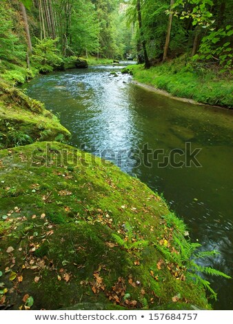 Autumn forest, river bank with boulders. Stock photo © borysshevchuk