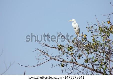 Vee boom afrika witte mooie Stockfoto © davemontreuil