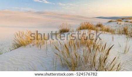 Belo mar báltico areia praia vintage padrão Foto stock © natika