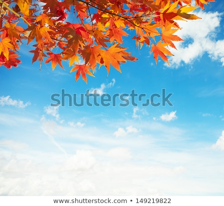 Maple twigs on blue sky background Stock photo © Anna_Om