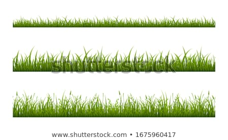 Green grass on white Stock photo © cherezoff