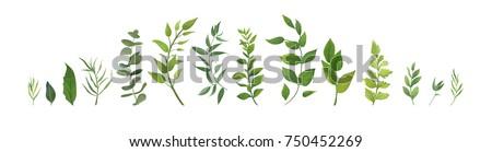 Zöld levelek trópusi növény makró lövés természet Stock fotó © manera