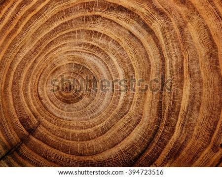 макроса Кора выстрел старые дерево Сток-фото © hamik