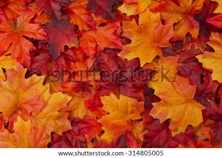 Vermelho folhas outono árvore floresta natureza Foto stock © njnightsky
