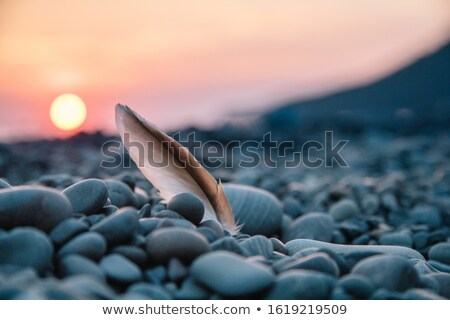 seagull feather in beach stock photo © 5xinc