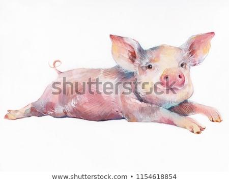 Engraçado animal porcos estilizado mensal calendário Foto stock © Olena