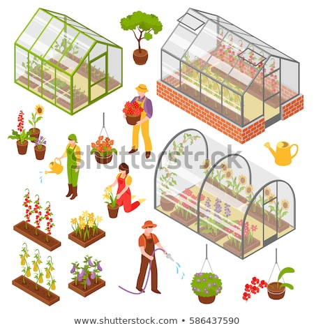 Greenhouse isometric 3d icon. Growing seedlings in glasshouse Stock photo © orensila
