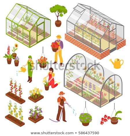 Greenhouse isometric 3d icon. Growing seedlings in glasshouse Stock photo © orensila
