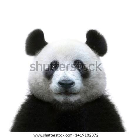 Panda illustrazione natura wallpaper sola disegno Foto d'archivio © colematt