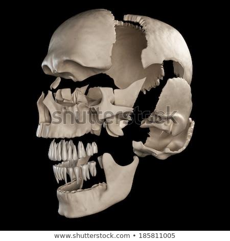 Emberi koponya alkatrészek nézőpont kilátás fekete Stock fotó © Pixelchaos