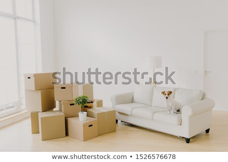 Image of big light room with pile of packages and potted plant, white comfortable sofa and pedigree  Stock photo © vkstudio
