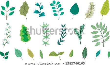 Verde cute hoja flora diseno elementos Foto stock © foxbiz