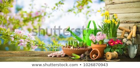 Flower potting, dirt and gardening tools Stock photo © erierika