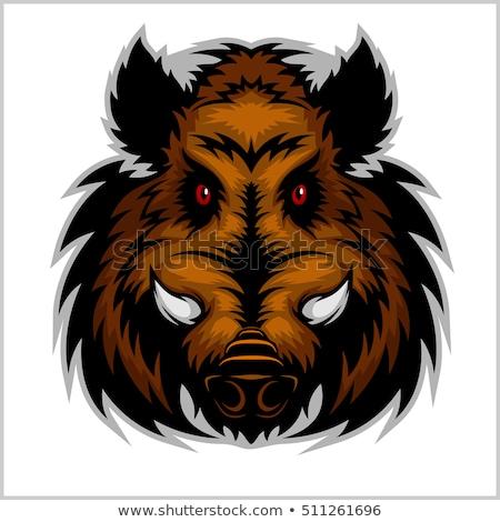 Stock foto: Boar Razorback Cartoon Face Vector Illustration