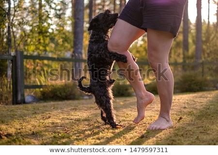 Stok fotoğraf: Kadın · bacaklar · köpek · rus · terriyer · göz
