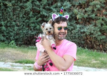 Terrier Jesters Stock photo © michelloiselle