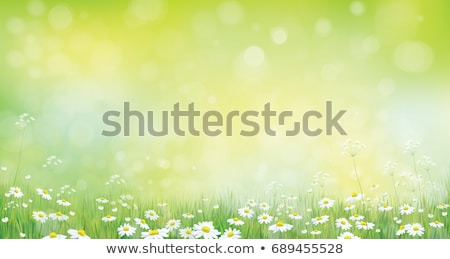 Stock photo: vector chamomiles on the meadow