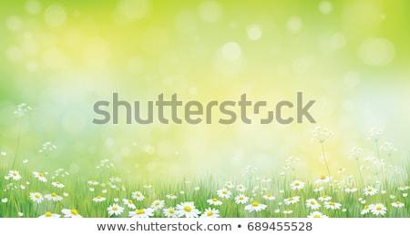 Stok fotoğraf: Vektör · çayır · su · bahar · yeşil · renk