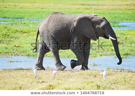 África · sabana · elefantes · puesta · de · sol · árbol · África - foto stock © prill