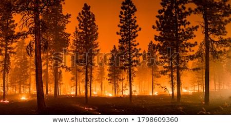 Futótűz égő száraz fű nyár természet Stock fotó © timbrk
