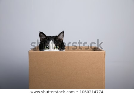 Cat in a box stock photo © Koufax73
