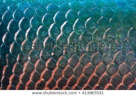 Metal Fish Scales Stock photo © emattil