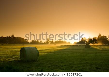 Country Scene with haystacks Stock photo © Kotenko