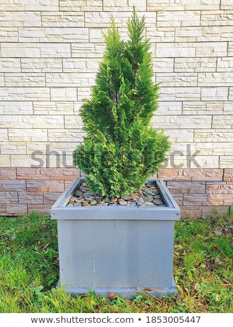 Tree with flower pot Stock photo © zzve