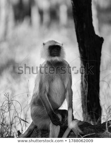 Beautiful photograph of a monkey posing Stock photo © jrstock