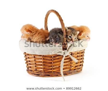 Stock fotó: újszülött · narancs · fehér · kiscicák · kosár · gyömbér