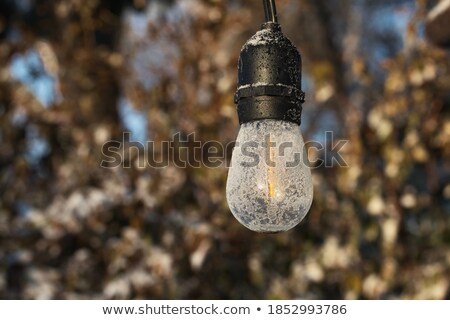 Iced snow detail macro, back light Stock photo © lunamarina