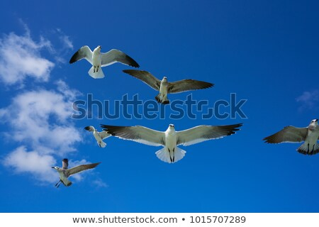 flying seagull sea bird view from below blue sky stock photo © lunamarina