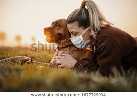 üç · sevimli · köpekler · border · collie · avustralya · çoban - stok fotoğraf © arenacreative
