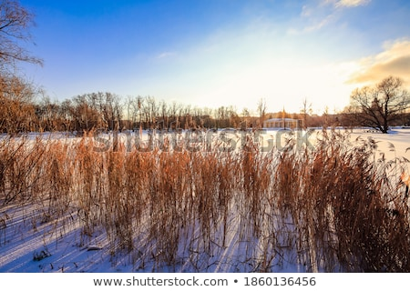 Winter Hoar Frost  Over the Frozen River Stock photo © wolterk