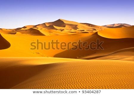 Areia deserto ondulação escaravelho pegadas verão Foto stock © Mikko