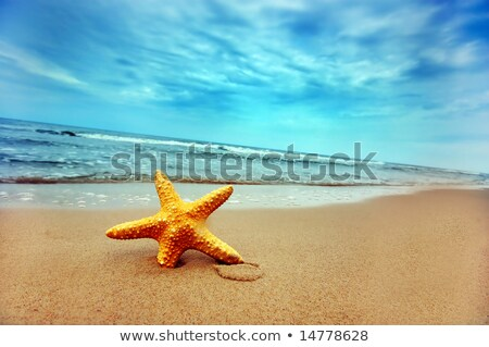 Belle starfish plage paysages Croatie ciel Photo stock © Geribody