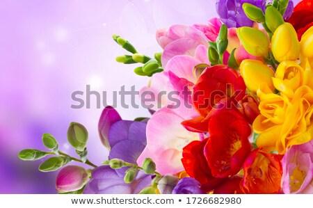posy of freesias flowers Stock photo © neirfy