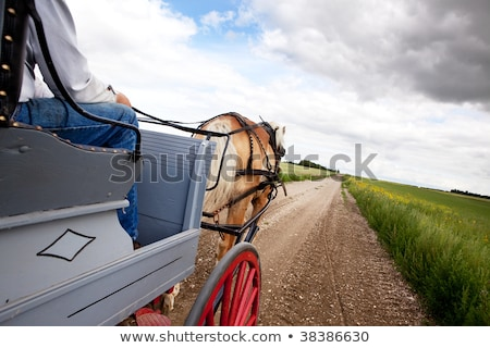a horse pulling a cart across a beautiful saskatchewan landscape stock photo © meinzahn